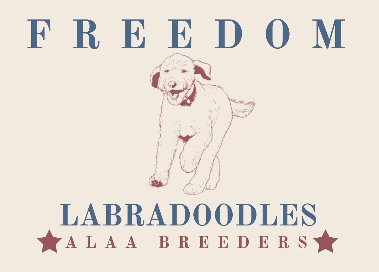 Freedom Labdradoodles
