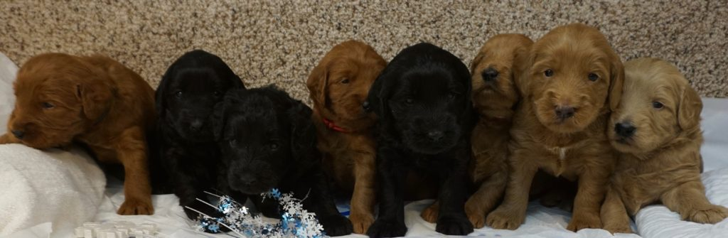 Sparkles-litter-at-3.5-weeks--1024x335