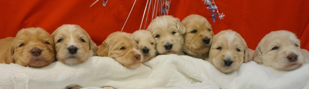 Peaches-litter-at-3-weeks-1024x297